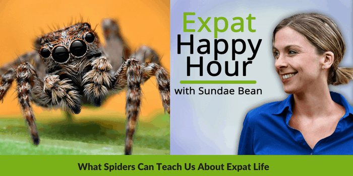 What Spiders Can Teach Us About Expat Life, And Changing Perspective on Living Abroad