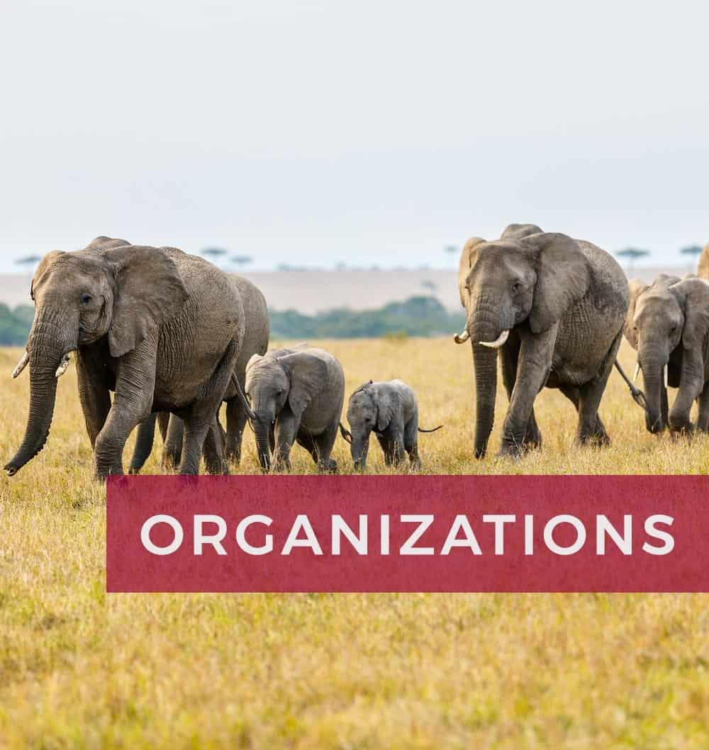 Work-Together-Organizations