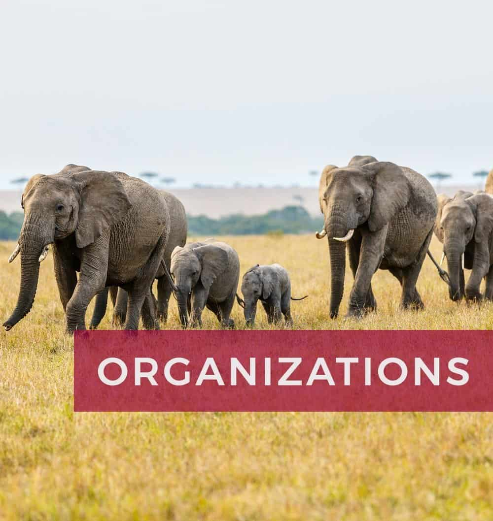 Work-Together-Organizations_op